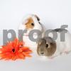 Quinn and Dana - Hires071617 (9)