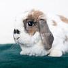 Snickers_Rabbit_AWLA_02072018_00_AD