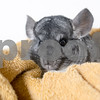 FlorenceandRue_Chinchillas_AWLA_01242018_07_AD