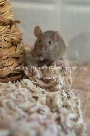 mice_AWLA_05212018007_DS