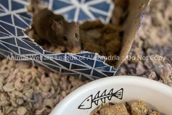 mice_AWLA_05212018001_DS