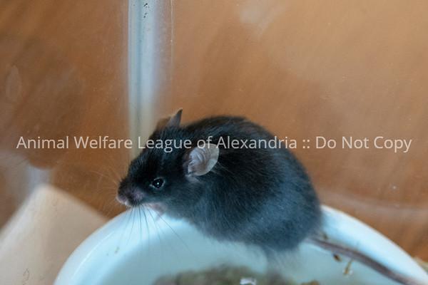 mice_AWLA_05212018005_DS