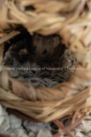 mice_AWLA_05212018003_DS