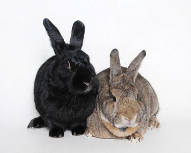 2018 October Small Animal Gallery