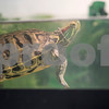 3_15_2016_turtle_Spunky_3