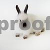 Lola_rabbit_3_29_2016