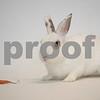 3_15_2016_bunny_Bessie