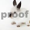 Lola_rabbit_3_29_2016_2