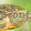 3_15_2016_turtle_Spunky_2