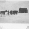 [Robert Wells with a pony and oxen, near Gravelbourg]