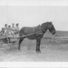 [Jerry the mule pulling a school cart, Wartime, c. 1932]