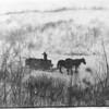 [Cliff Bekken hunting bush rabbits on Wood River, 1915]