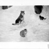 [Dog and two cats in the snow, south of Arcola, 1946]