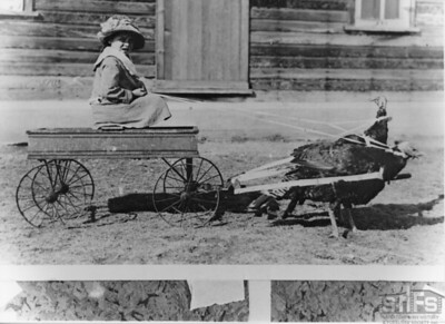 [Jean Craig and two turkeys pulling the wagon]