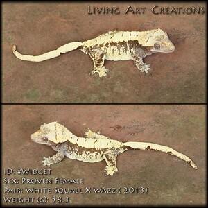 """""""Widget"""" - $800 - White Squall x Wazz - FEMALE - 58.3 grams"""