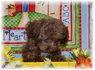PUPPY NUMBER: # SEL MP 700