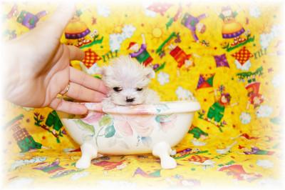 Puppy Number # SAMMY 1025 Samson at 3 months of age
