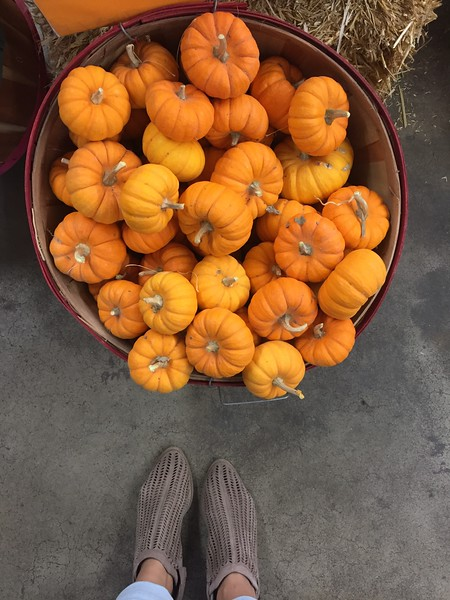 baby pumpkins and cute shoes