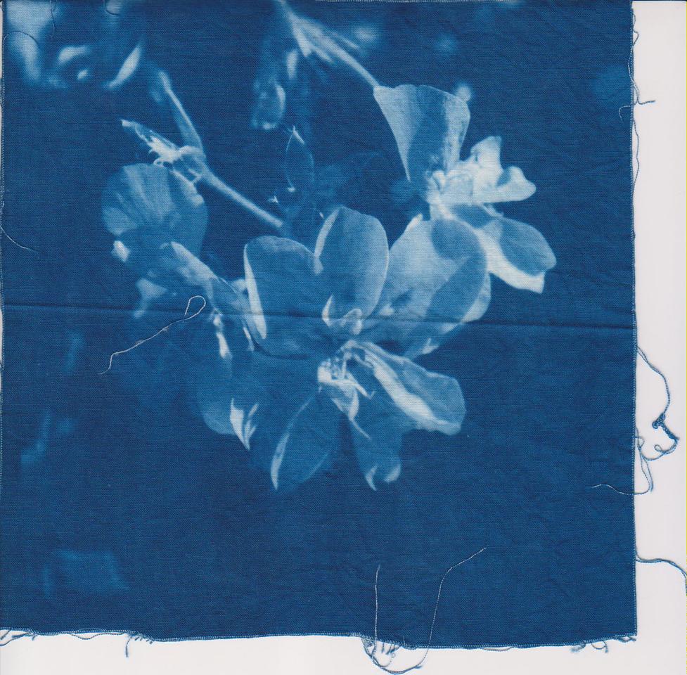 Bluey Flowers