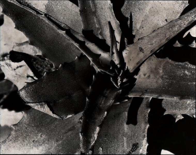 brownish plant