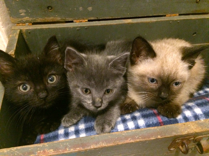 box of kittens