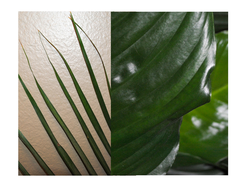 Plant: wide and narrow