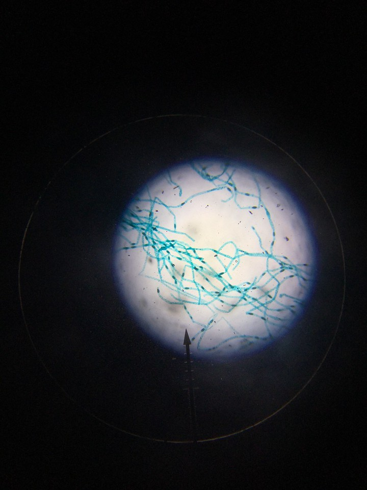 Cell Light
