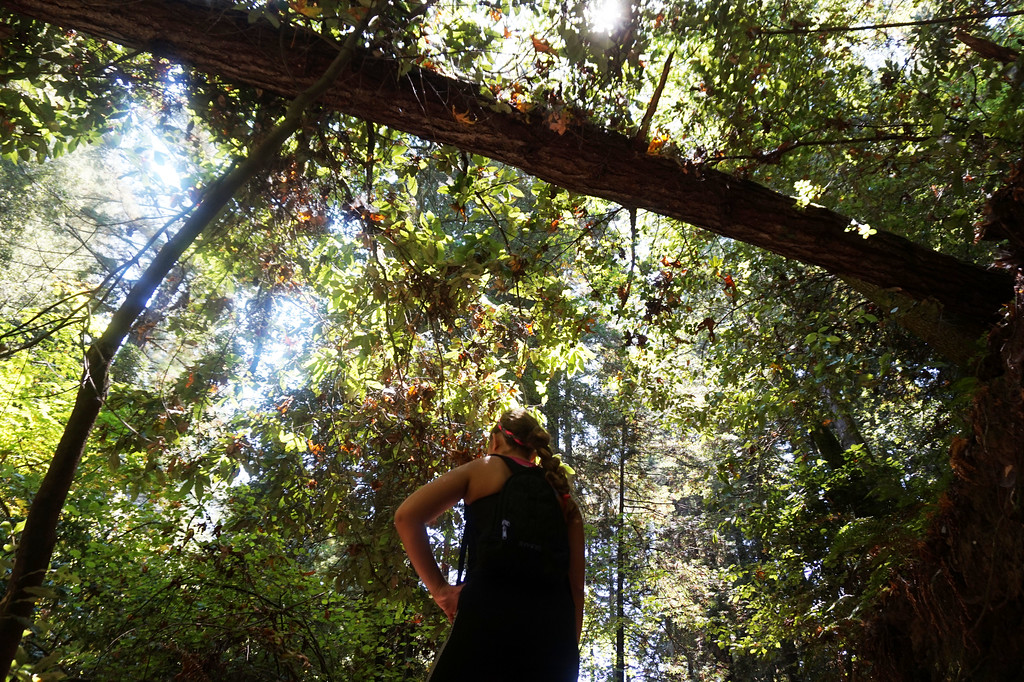 Hiking with Tall Trees