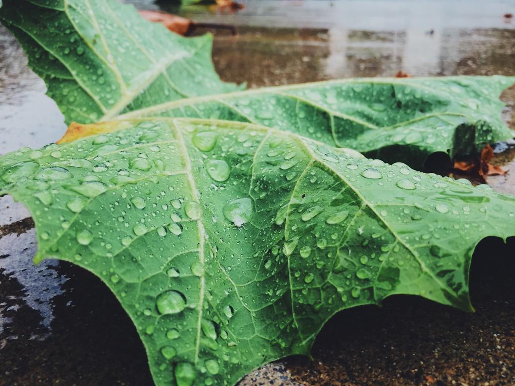 Fragile Fall Leaf