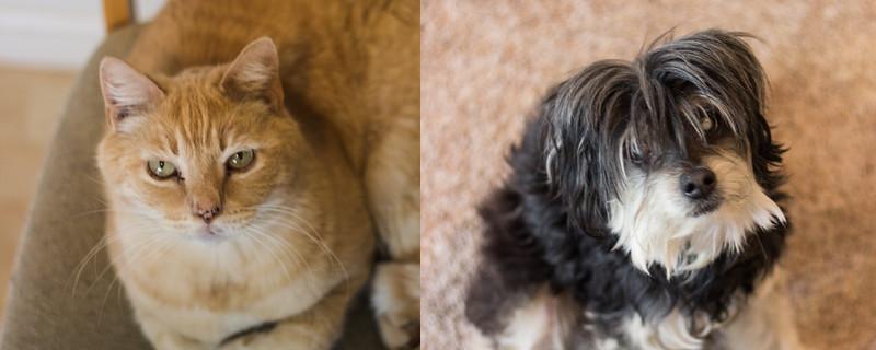 cat//dog
