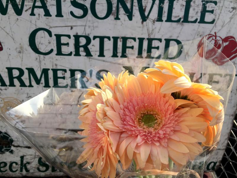 Watsonville Certified