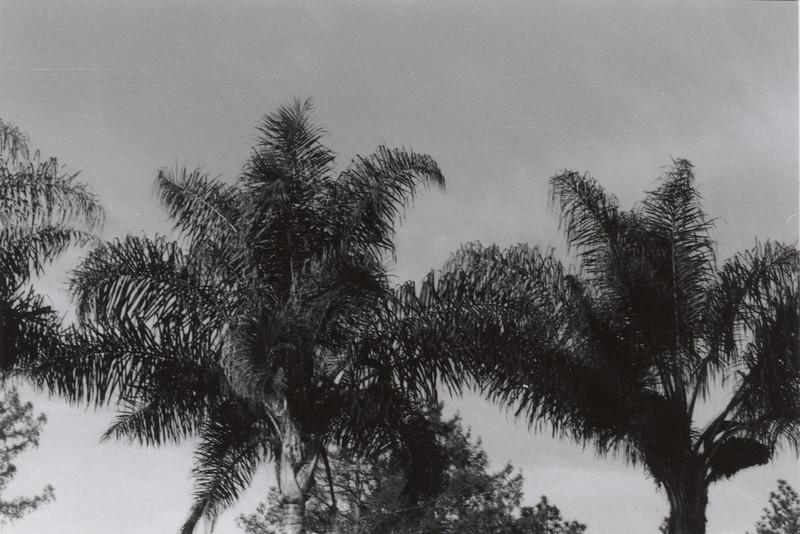 Third Tree
