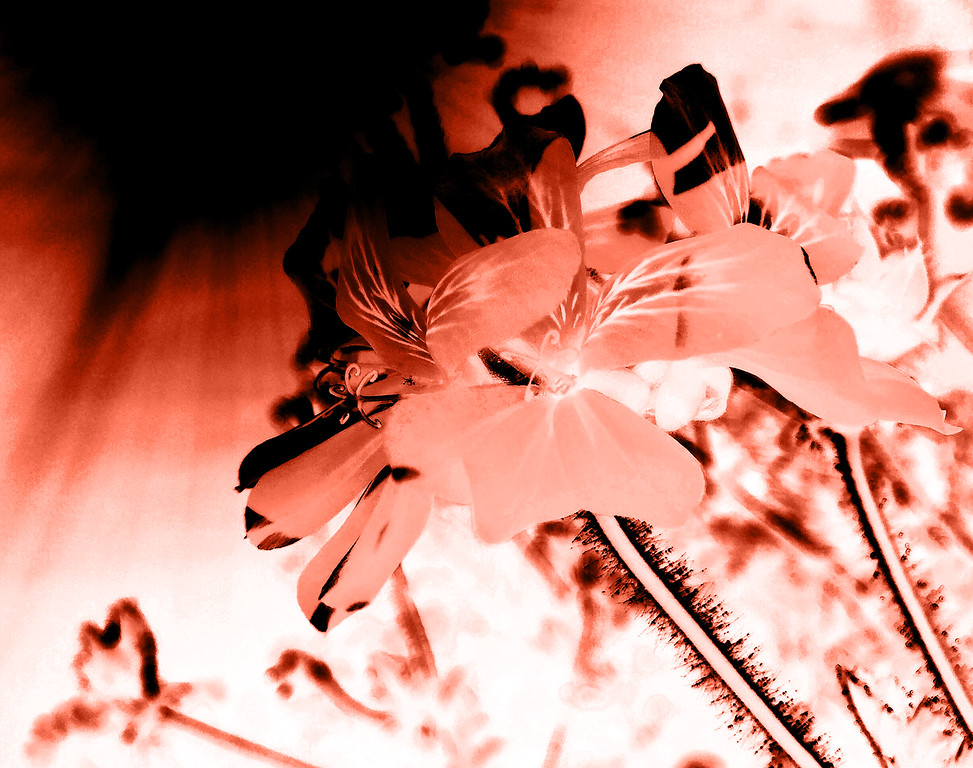 Cyanotype Negative