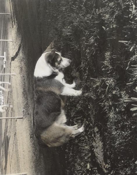 Lite Dog