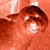 Furry Friend Digital negative