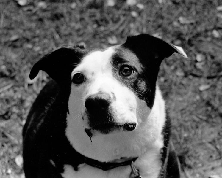Daisey Dog