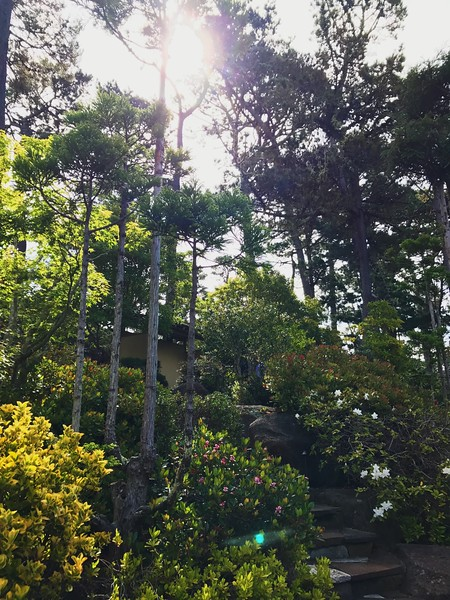 Vibrant Trees