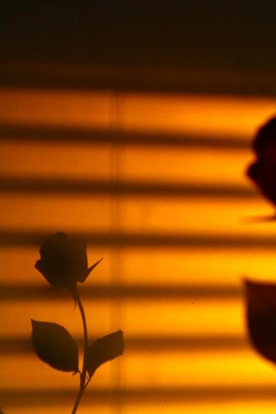 A Dark Rose
