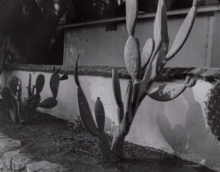 Dowtown Cactus