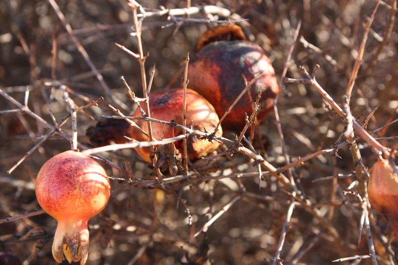Rotting Fruits