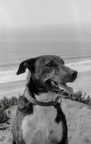 Doggy Dunes