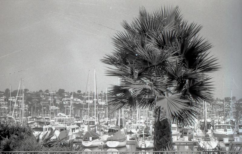 Island Palm View
