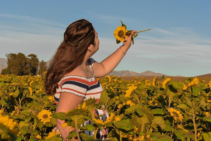 Sunny Flower Field