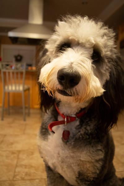 Finley, My Dog