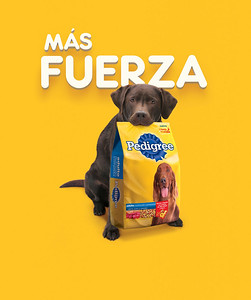 Agency: Teran TBWA Client: Pedigree