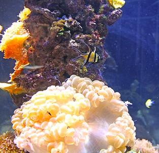 Caribbean Currents Exhibit at Adventure Aquariam