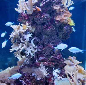 Tropical Fish at Adventure Aquarium in Camden