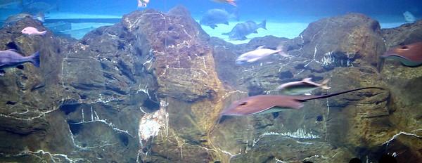 Ocean Realm at Adventure Aquarium in Camden NJ