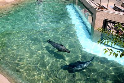 """""""Seals Up-Close"""" Encounter At Adventure Aquarium"""