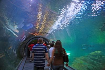 The Shark Tunnel at Adventure Aquarium in Camden, NJ